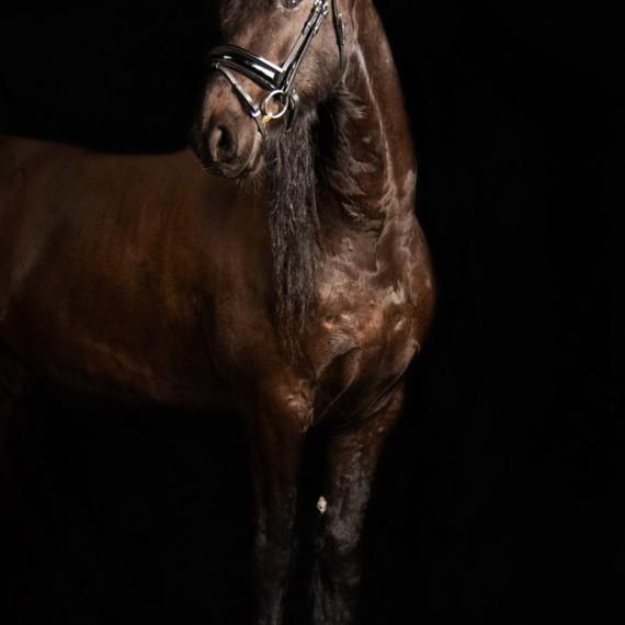 Sylvana de Bruin dieren fotografie en video paarden (2)