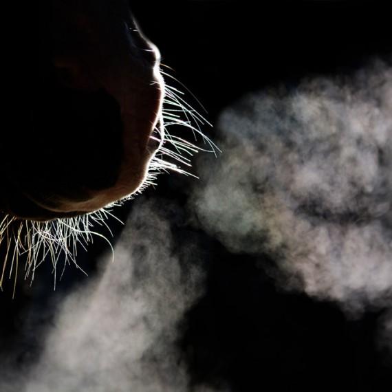 Sylvana de Bruin dieren fotografie en video paarden (5)