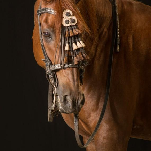 Sylvana de Bruin dieren fotografie en video paarden (6)