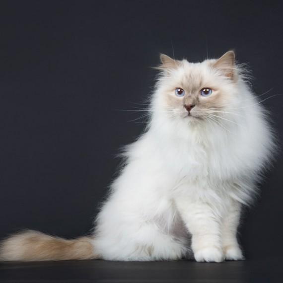 sylvana-de-bruin-dieren-fotografie-en-video-paarden-honden-katten (26)
