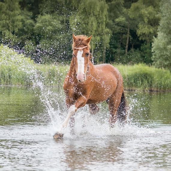 sylvana-de-bruin-dieren-fotografie-en-video-paarden-honden-katten (36)