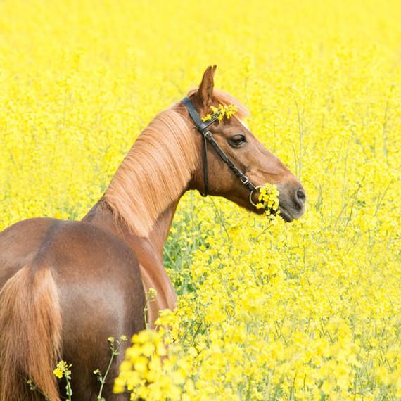 sylvana-de-bruin-dieren-fotografie-en-video-paarden-honden-katten (39)