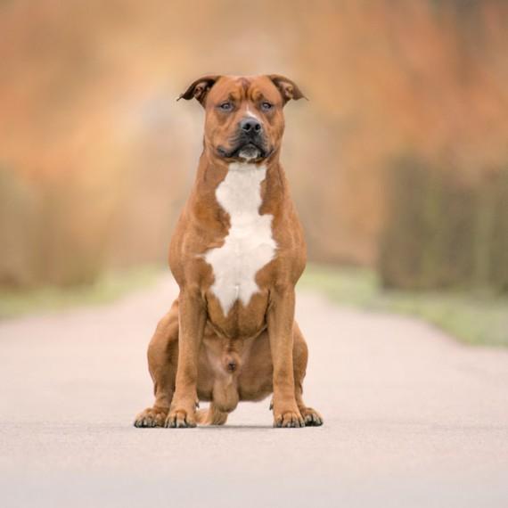 sylvana-de-bruin-dieren-fotografie-en-video-paarden-honden-katten (4)