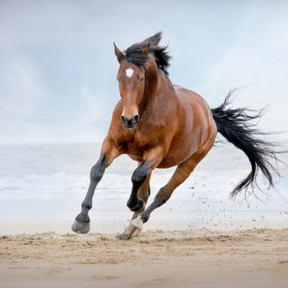 sylvana-de-bruin-dieren-fotografie-en-video-paarden-honden-katten (5)