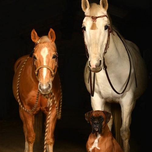 sylvana-de-bruin-dieren-fotografie-en-video-paarden-honden-katten (9)