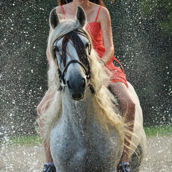 sylvana de bruin dieren fotografie en video paarden honden (7)