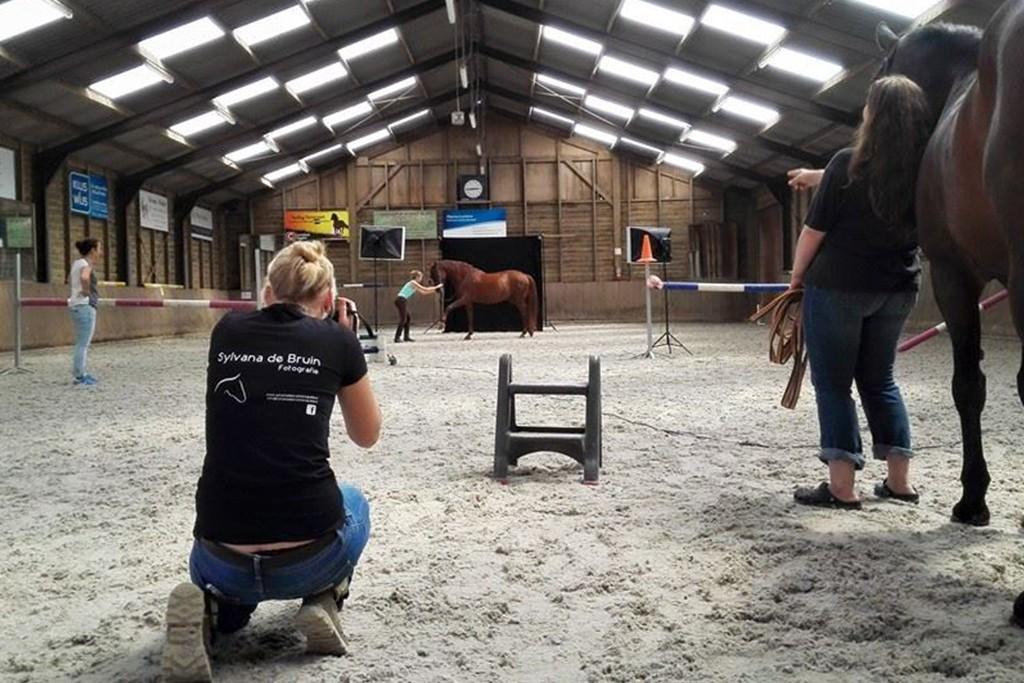 sylvana de bruin fotografie paarden in de studio 2
