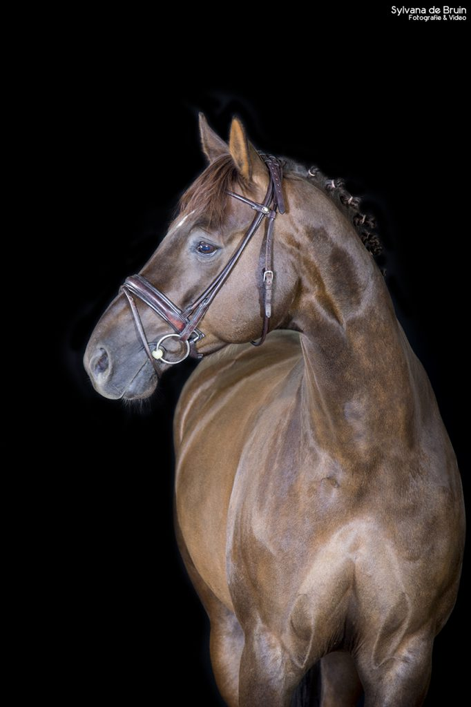 paardenfotografie (1)